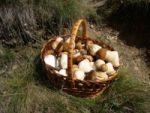 So lecker und auch noch kostenlos: Pilze aus dem Wald