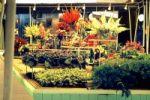 Internationale Gartenbau Ausstellung in Erfurt